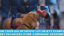 Un chien qui retrouve les objets égarés des passagers d'une compagnie aérienne! Aujourd'hui dans la minute chien #79