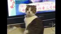 Fous rires garantis ( chat animaux fun funny fail humour joke sexy girl drôle comique fille)