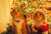 A Supercut of Cats Destroying Christmas Decorations