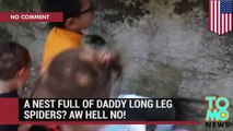 Daddy longlegs spider nest: man puts hand in hole, grabs a fist full of spiders - TomoNews