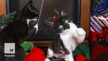 Christmas Kittens Frolickicking by the Yule Log