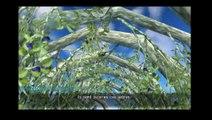 Steven sur Crisis Core/Final/Fantasy VII encore une fois avec mission a 100 % cette fois :) (26/12/2015 04:00)