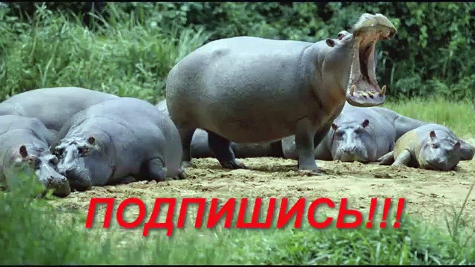 Приколы с животными №52 Притворись мертвым часть 2. Собаки HD Смешные животные Animal vide