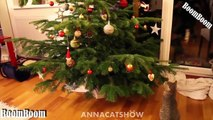 Funny Videos - We Wish You A Merry Christmas - Funny Cats and Dogs Videos Merry Christmas 2016
