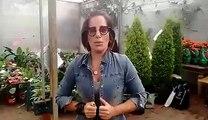 Gloria Pires manda beijo para o 'Blog Memorial Gloria Pires'