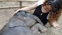 Câlin avec un éléphanteau endormi