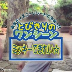 【とびきりのワンシーン002】ミッキーできれい☆