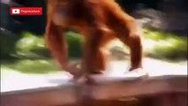 ЛУЧШИЕ ДРУЗЬЯ (((СМОТРЕТЬ ВСЕМ ВСЕМ ВСЕМ))) СУПЕР ОФИГEHHO(Dogs and monkeys FRIE
