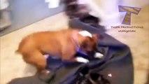 Funny Pets Chasing Laser Pointers Part 2 - Crazy Cats, Crazy Dogs, Funniest Animals, Kitty Cats - Lazerle kandırılan hayvanlar