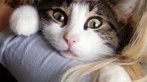 Смешные животные девушка целует кота смешные животные приколы