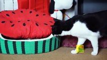 Funny Cats and Dogs compilation. November 2015
