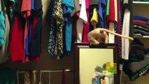 Funny Cats compilation. Cat fails. November 2015