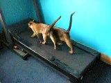 funny cats kittens running on the treadmill