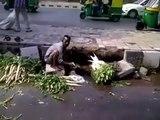 Un indien lave des légume dans l'eau sale d'un égout...
