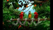 Parrot Talking, Parrot Dancing, Parrot Singing VIDEOS 5