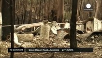 Rescuers nurse cute koala after bushfires hit southern Australia