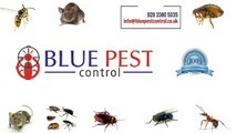 Blue Pest Control ,  Bed Bug Control in Norbury London ,  Mice Control in London ,  Rat Control ,  Cockroach Control