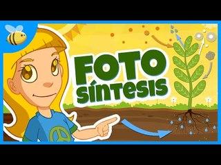 Partes de las Plantas y la Fotosíntesis - Aula365