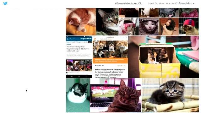 Nachschlag: Von Lord Helmchen, Katzen und mehr …