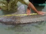 Fish Warrior: Living Dinosaur - Jakub Vagner