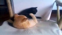 Katzen - Die beste Katzen Videos #1