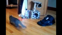 Best Funny Cats Trying To Catch Laser Light Cats vs Laser Pointer Compilation