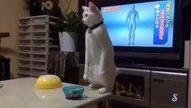Strange Cat walk backwards - Funny Cat - Crazy Cat - Weird Cat - Funny Kitten