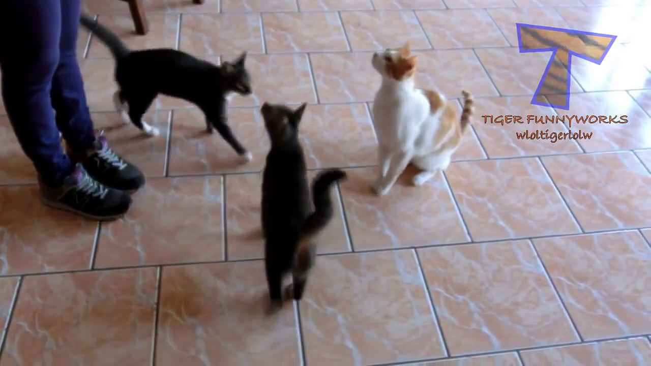 Funny cats and dogs begging for food Cute animal compilation