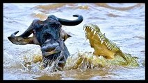 Animal Documentary National Geographic: FIVE STAR KILLERS Lion, Crocodile, Cheetah & More!