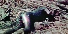 The World At War 1973(World War II Documentary) 23 Pacific (February 1942 – July 19