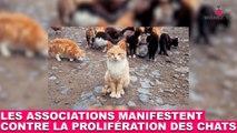Les associations de protection animale manifestent contre la prolifération des chats. À suivre dans la minute chat #88