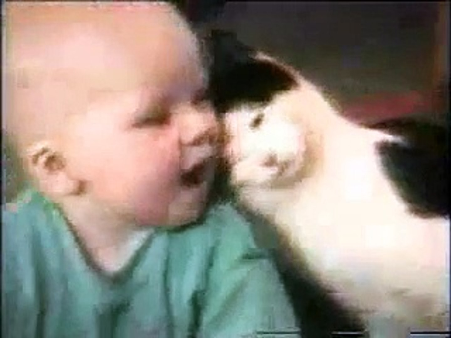 America's Funniest Home Videos - Funny Cats(1)