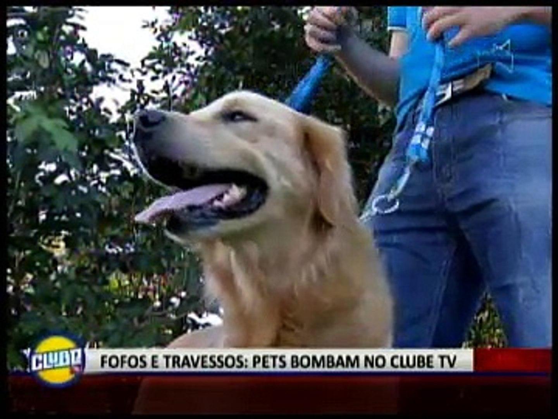 FOFOS E TRAVESSOS: PETS BOMBAM NO CLUBE TV