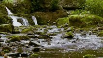 Relaxing Nature Scenes - Natures Relaxing Music
