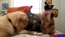 Cute Animals - Cat Boxing Dog So Funny Videos - Best Funny Animals Videos Compilation 2015