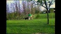 Un chien arrose son maître avec un tuyau d'arrosage