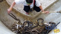 Snake Charmer - Man Gets Far Too Close to These Angry Snakes!