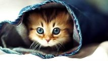 CUTE KİTTENS ARE PLAYİNG GAMES !! FUNNY CATS / CuteKittens