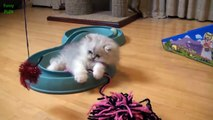 Cutest Teacup Puppies and Kittens Compilation 2015 [NEW HD] - Funny Animals Channel