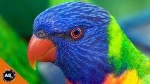 Birds! Awesome Video Of Australian Birds! CrittaCam - Ep. 64 : AnimalBytesTV