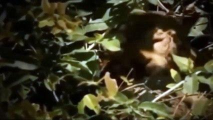 Top 10 Animal Fight - Lion VS Gorilla Real Fight - Leopard vs Cr