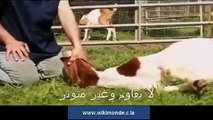 Miracles islamic  Miracle of Islam amazing Islamic video