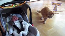 Animals meeting babies for the first time : cute dogs and cats compilation!