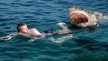 Strange things in the Amazon forest Shark Documentary_Animal Planet Wildlife Documetary HD 2015