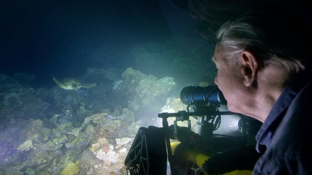 Encountering a green turtle - Great Barrier Reef with David Attenborough: Episode 1 Preview - BBC