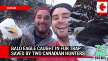 Bald eagle caught in fur trap rescued by two Canadian brothers out hunting by Windy Lake - TomoNews