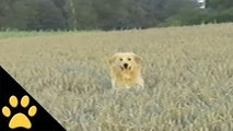Dogs Frolicking In A Meadow