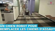 Un chien robot pour remplacer les chiens d'assaut! À découvrir dans la minute chien #89