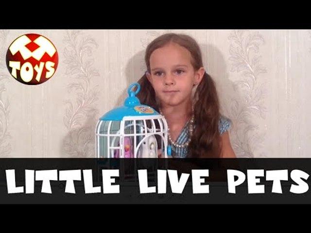 Интерактивные птички Little Live Pets Bird. Видео девочки Амиры. Моя Любимая Игрушка