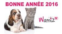 Wamiz TV vous présente ses meilleurs voeux pour 2016!